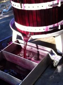 Pressing Pinot