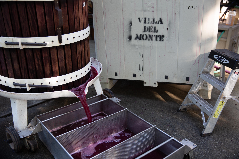 Pressing Pinot Noir
